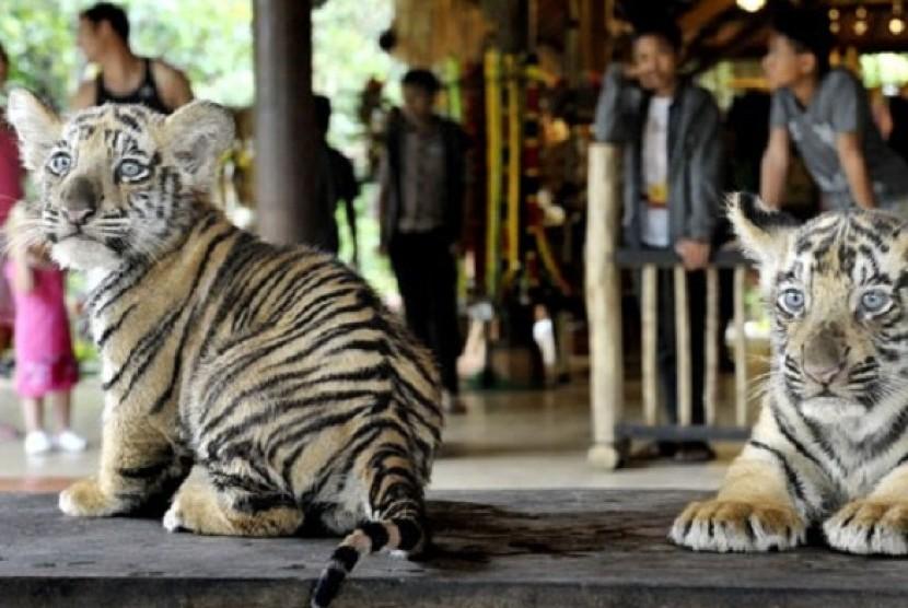 Kebun Binatang Bali Diserbu Pengunjung Libur Imlek Republika Online Zoo