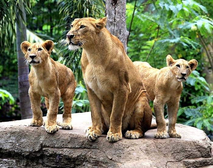 Kebun Binatang Bali Paket Tour Murah Zoo Park Adventures Kab