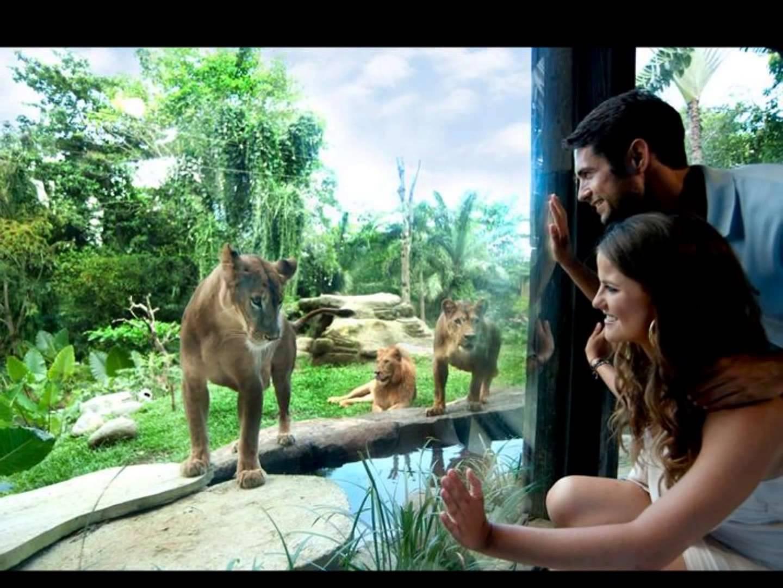 Kebun Binatang Bali Youtube Kab Gianyar