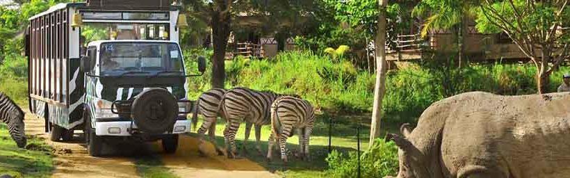 Kebun Binatang Bali Zoo Safari Bird Park Marine Kab Gianyar