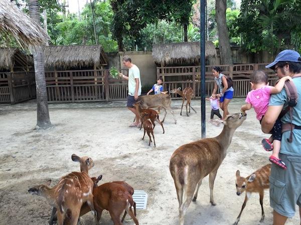 Kebun Binatang Bali Zoo Safari Mommy Helper Kab Gianyar