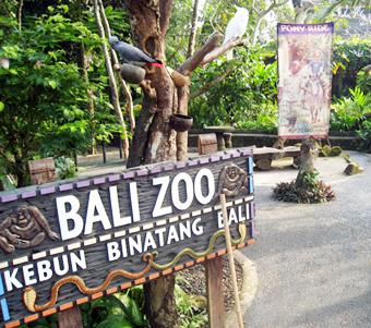 Mengunjungi Bali Zoo Park Singapadu Gianyar Kebun Binatang Kab