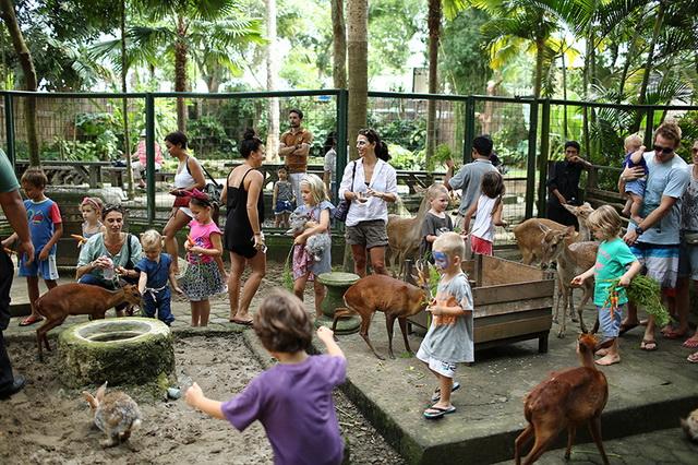 Menikmati Wisata Keluarga Bali Zoo Park Gianyar Infodenpasar Kebun Binatang