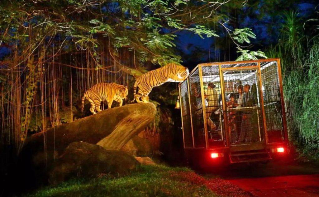 Night Zoo Gianyar Sensasi Liburan Berkeliling Kebun Binatang Bali Kab