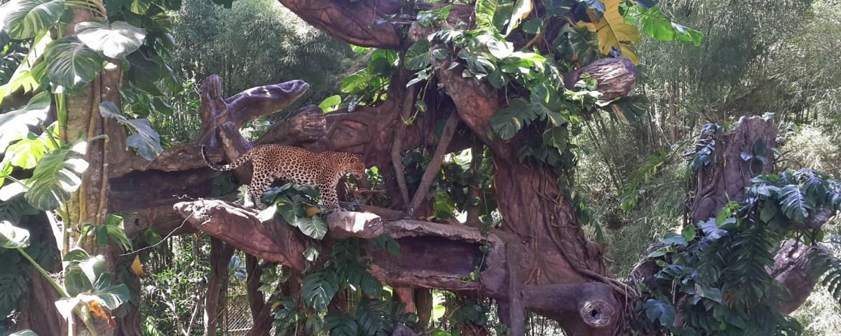 Paket Tour 1 Hari Bali Safari Marine Park Kebun Binatang
