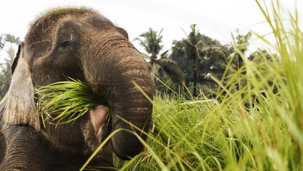 Prasmanan Ala Gajah Gianyar Bali Taufiqurokhman Kebun Binatang Zoo Memanjakan