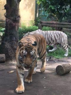 Renae Jones Jamie Shaw Wedding Website Bali Zoo Kebun Binatang