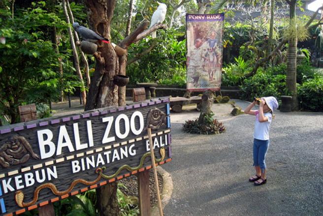 Serunya Berwisata Kebun Binatang Bali Menujubali Commenujubali Kab Gianyar