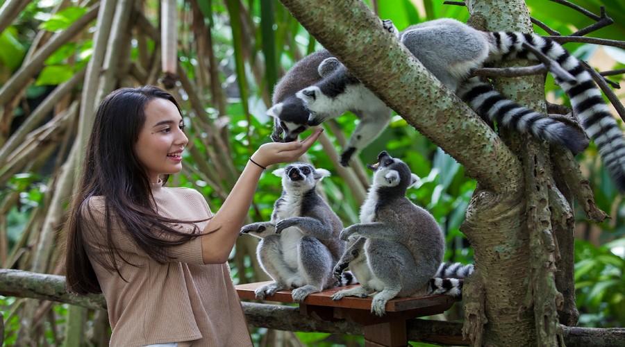 Terbaru Tiket Bali Zoo Nikmati Serunya Berwisata Park Melihat Aneka