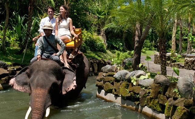 Tiket Masuk Kebun Binatang Bali 2016 Kab Gianyar