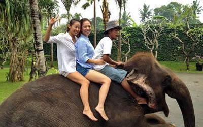 Wisata Bali Zoo Park Paket Kebun Binatang Explorer Kab Gianyar