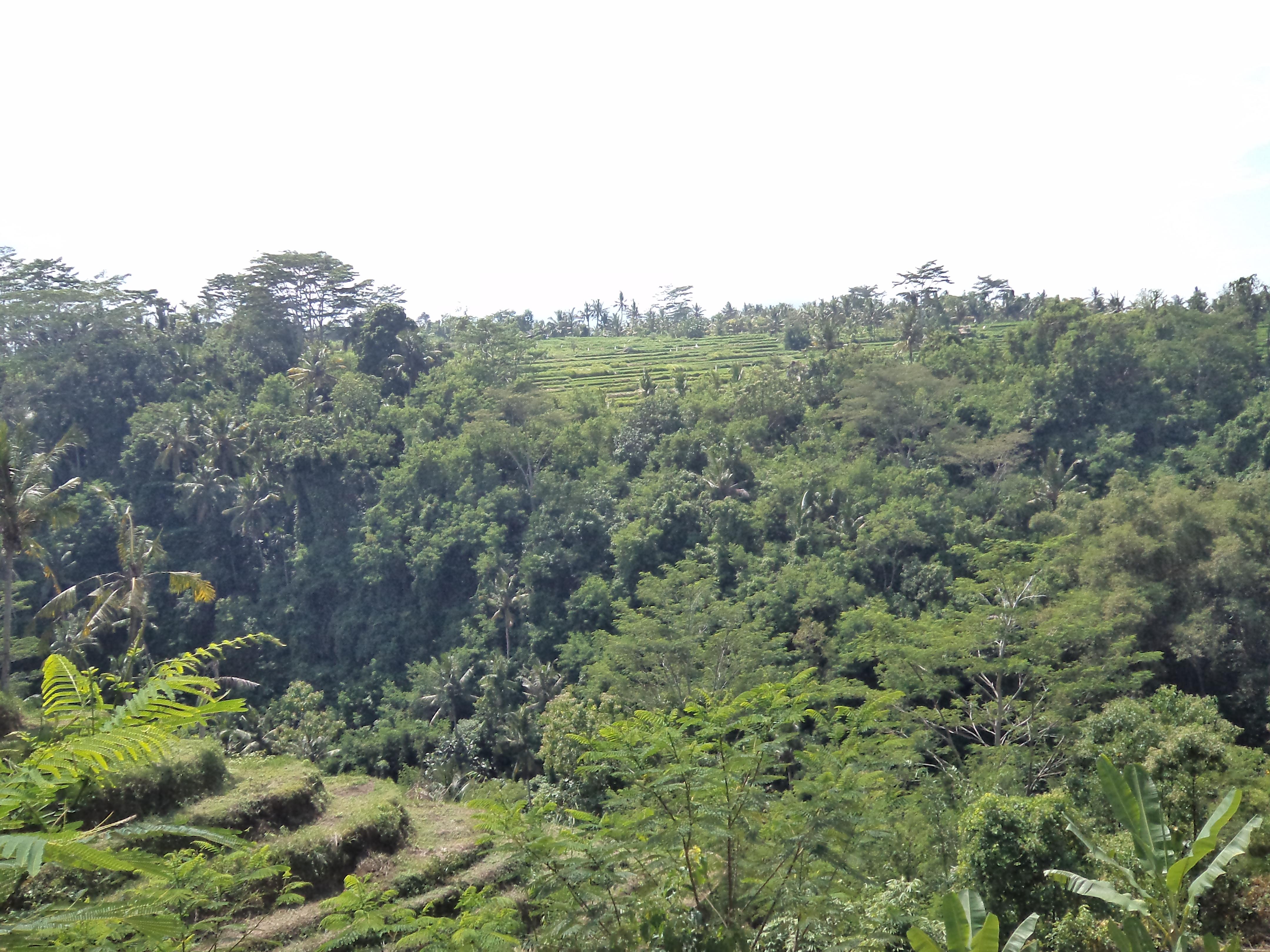 Siswa Kelas Vi Tour De Taman Nusa Gianyar Bali Mit