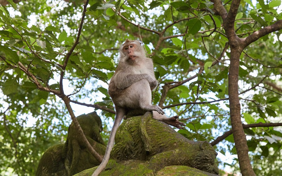 Top 5 Central Ubud Sailingstone Travel Monkeys Grab Attention Possibly