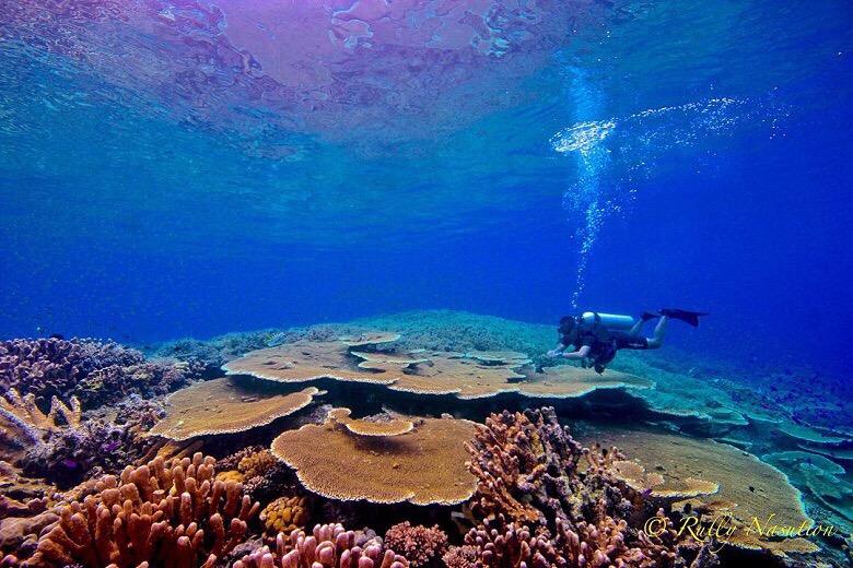 Merayakan Hari Sumpah Pemuda Teluk Tomini Traverse Id Mahasiswa Pencinta