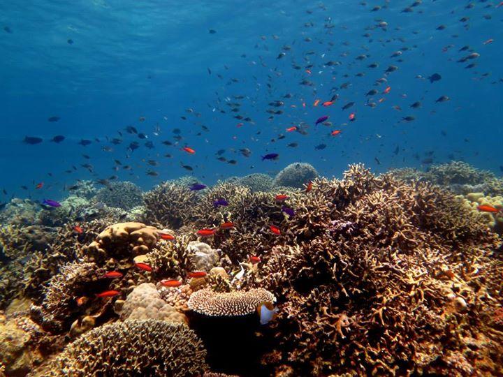 Teluk Tomini Jantung Segitiga Terumbu Karang Dunia Ancaman Menyimpan Kekayaan