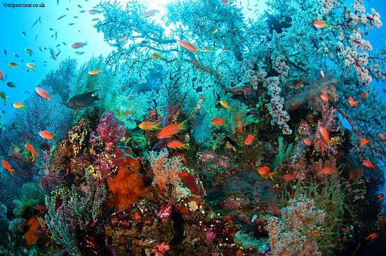 Teluk Tomini Sebuah Surga Yg Hilang Sulawesi Divers Kab Gorontalo