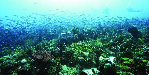 Terumbu Karang Teluk Tomini Makin Rusak Bacaan Kab Gorontalo