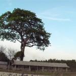 Pemerintah Kabupaten Gresik Pantai Kubur Panjang Kuburan Kab