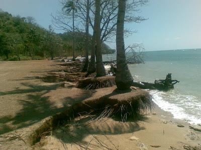 Pantai Mayangkara Abrasi Media Bawean 2 Agustus 2008 Abarasi Kab