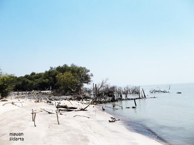 Pantai Mengare Mulai Rusak Oleh Mawan Sidarta Kompasiana Pepohonan Gambut