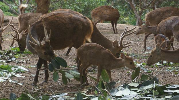 Pulau Bawean Antara Legenda Keindahan Alam 1 Penangkaran Rusa Kab