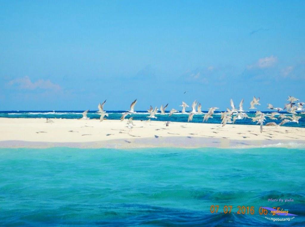 Pulau Bawean Ngebolang Trip Tour Travel 14 Penangkaran Rusa Kab