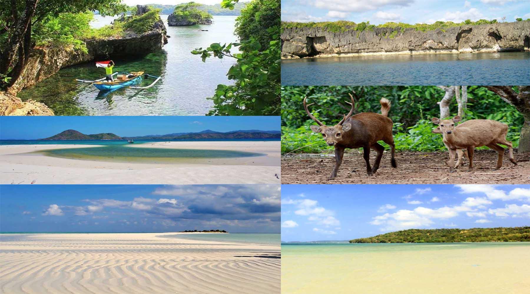 Pulau Bawean Surga Tersembunyi Jawa Timur 548669 Tidak Rusa Langka