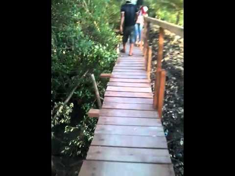 Alam Mangrove Banyuurip Ujung Pangkah Gresik Jatim Wisata Pusat Kab
