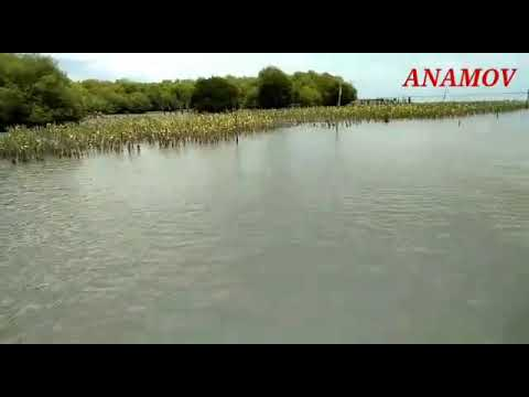 Banyuurip Mangrove Center Youtube Pusat Kab Gresik