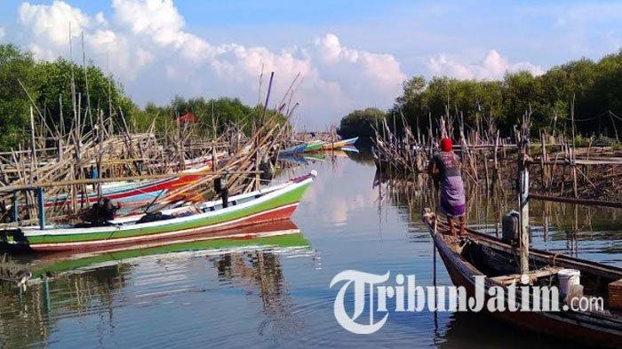 Jauh Kota Nelayan Gresik Menjalankan Pekerjaannya Pusat Mangrove Banyuurip Kab