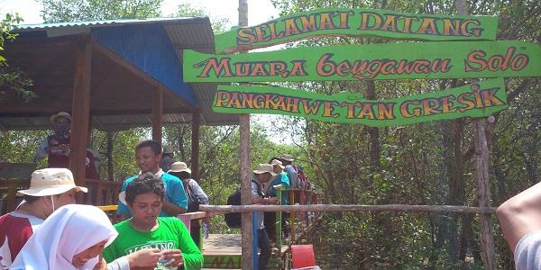 Pangkah Wetan Menjelma Jadi Wisata Mangrove Muara Bengawan Solo Pusat