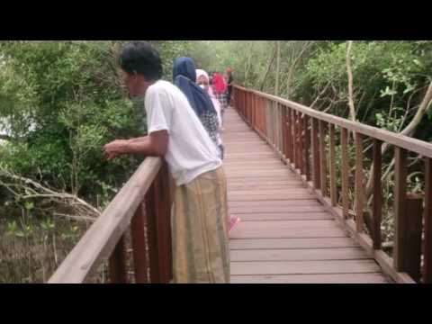 Wisata Alam Mangrove Banyuurip Ujung Pangkah Gresik Jatim Pusat Kab
