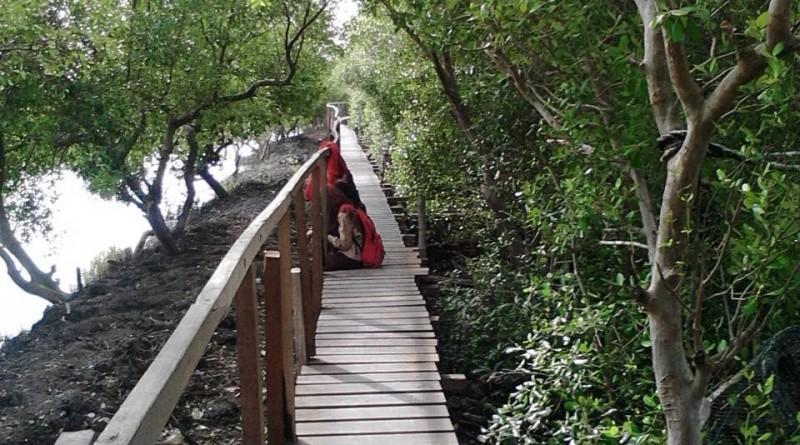 Wisata Gresik News Menikmati Akhir Pekan Kawasan Mangrove Banyuurip Ujungpangkah