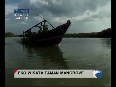 Wisata Mangrove Banyuurip Ujungpangkah Gresik Xalone Eko Hutan Banyu Urip