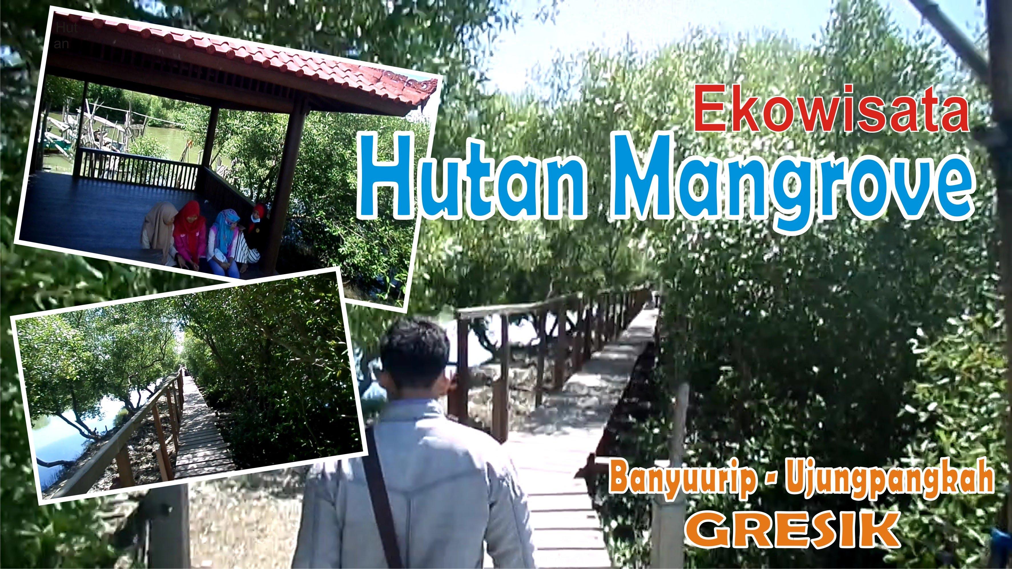 Wisata Mangrove Banyuurip Ujungpangkah Gresik Youtube Pusat Kab