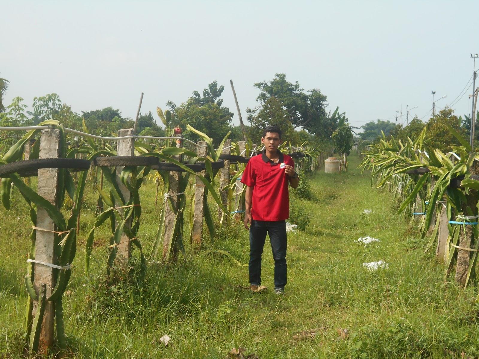 2017 Kim Harapan Bersama News Desa Kebonagung Ujungpangkah Gresik Terkenal