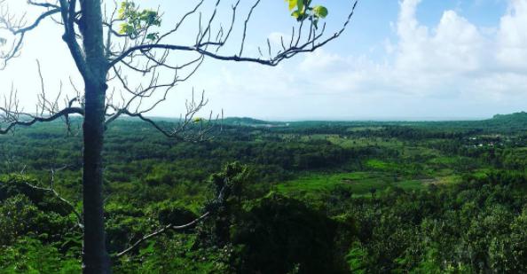 40 Tempat Wisata Gresik Memukau Pengunjung Gunung Surowiti Petik Buah