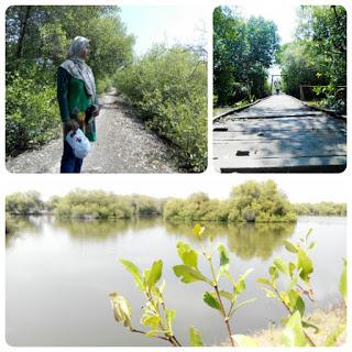 Agustus 2017 Mangruve Pangkah Wetan Solusi Wisata Alam Kota Pudak