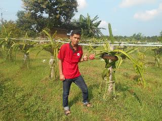 Website Kim Kebun Buah Naga Desa Kebonagung Solusi Berwisata Gratis