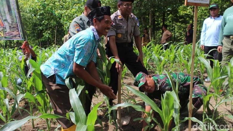 Ratusan Hektar Lahan Gundul Grobogan Ditanami Pohon Jati Kab