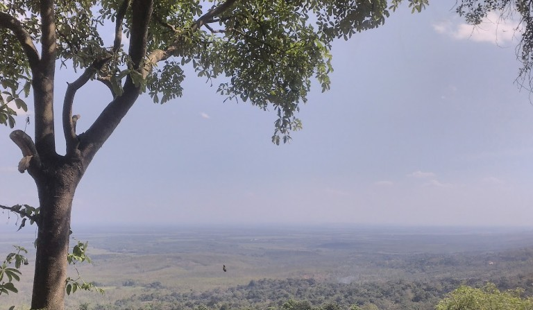 Wisata Jati Pohon Indah Jpi Widoajiwibowo Info Pemandangan Kota Purwodadi