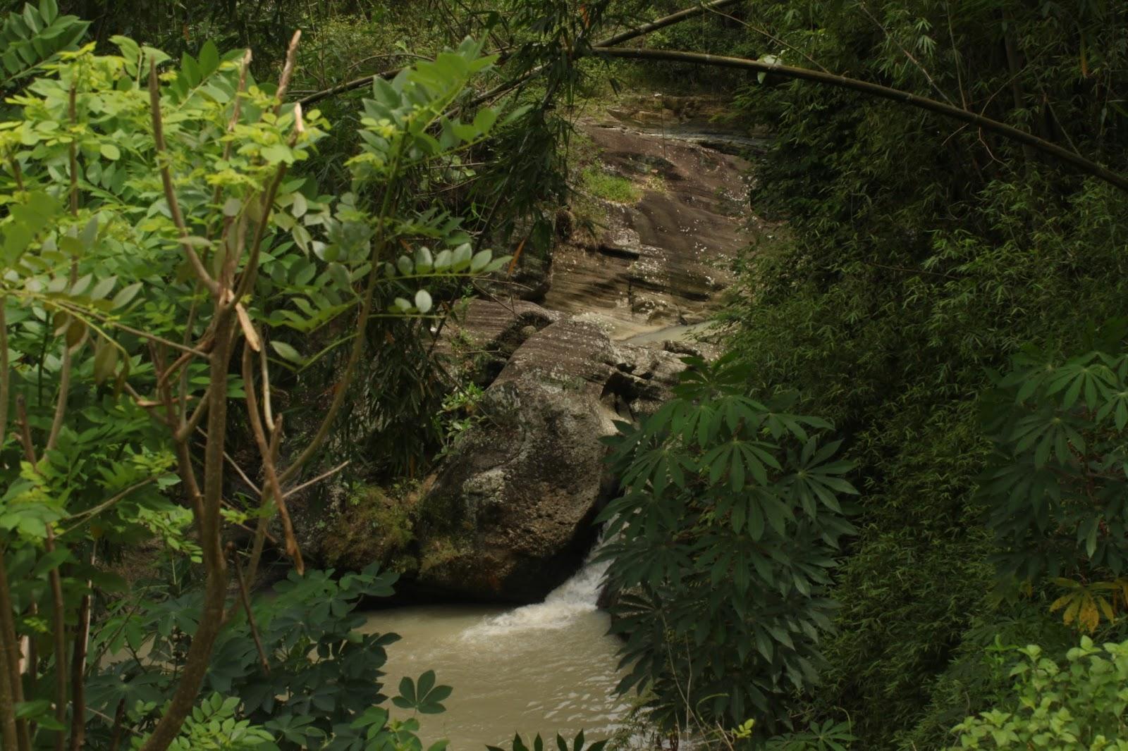 Hutan Kecil Curug Bayat Ngulik Yuk Bro Wisata Daerah Menggambarkan
