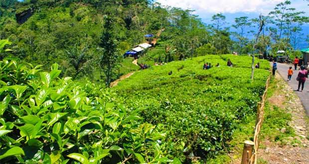 25 Tempat Wisata Jogja Terbaru Bagus Desa Nglinggo Hijau Gedangsari