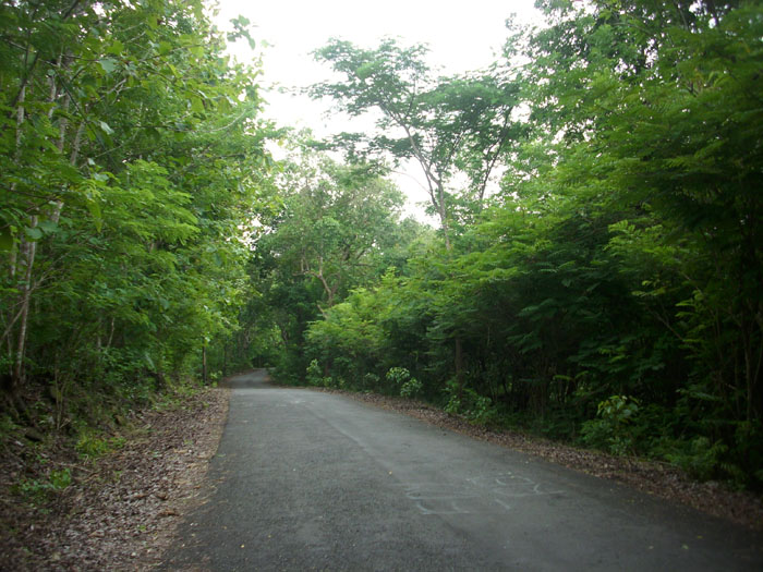 22 January 2012 Wadiyo Sblog Gb Jalan Mulus Lokasi Hutan