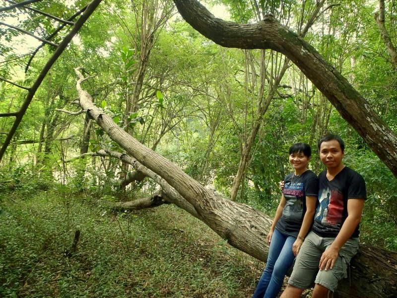 Andreas Seluas Samodra Wanagama Paru Kota Wonosari Hutan Mulai Diperhatikan
