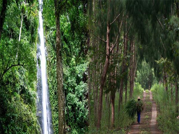 Desa Wisata Kemuning Muning Yogyakarta Menjadi Tujuan Gunungkidul Hutan Wanagama