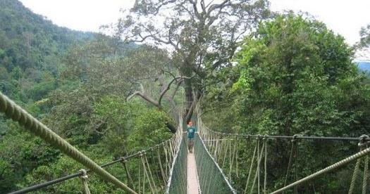Destinasti Objek Wisata Hutan Wanagama Dlingo Bantul Yogyakarta Daftar Tempat