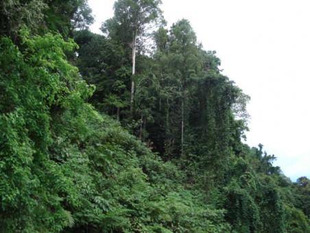 Harga Hp Samsung Hutan Wanagama Gunungkidul Gama Akronim Gajah Mada
