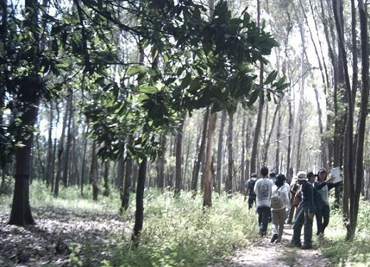 Hutan Pendidikan Wanagama Menilai Kesehatan Tanaman Jati Kawasan Kab Gunungkidul