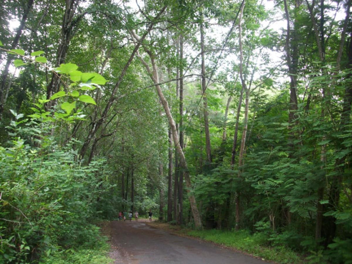 Hutan Wanagama Bantul Info Wisata Jogjaku Kab Gunungkidul